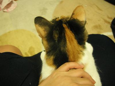 Cat_113